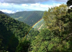 Rainbow over rainforest in Monteverde, photo credit #_bayito.